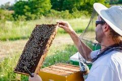 El Apiarist, apicultor está comprobando abejas en marco de madera del panal Imagen de archivo