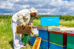 El Apiarist, apicultor está comprobando abejas en marco de madera del panal Fotos de archivo