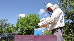 El Apiarist, apicultor está comprobando abejas en marco de madera del panal metrajes