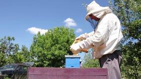 El Apiarist, apicultor está comprobando abejas en marco de madera del panal almacen de metraje de vídeo