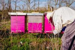 El Apiarist está haciendo la situación del control de la primavera en colonia de la abeja Imagen de archivo