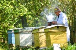 El apiarist mayor está fijando un fuego en un fumador de la abeja Fotografía de archivo