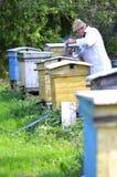 El apiarist mayor está fijando un fuego en un fumador de la abeja Imagenes de archivo