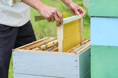 El apicultor coloca la colmena un nuevo marco para la miel Panal Fotos de archivo libres de regalías