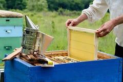 El apicultor coloca la colmena un nuevo marco para la miel Panal Apicultura Fotos de archivo libres de regalías