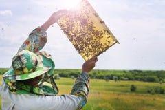 El apicultor con un marco de la abeja comprueba la cosecha de la miel Fotografía de archivo libre de regalías