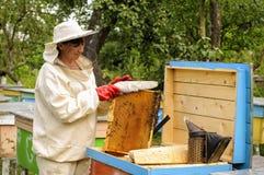 El apicultor de la mujer se ocupa abejas Fotos de archivo