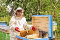 El apicultor de la mujer se ocupa abejas Imágenes de archivo libres de regalías