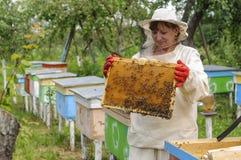 El apicultor de la mujer se ocupa abejas Imagen de archivo libre de regalías