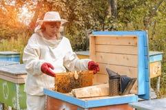 El apicultor de la mujer se ocupa abejas Imagenes de archivo