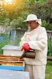 El apicultor de la mujer se ocupa abejas Foto de archivo libre de regalías