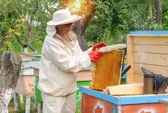 El apicultor de la mujer selecciona el peine de la miel para drenar Fotos de archivo