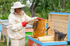 El apicultor de la mujer selecciona el peine de la miel para drenar Fotografía de archivo