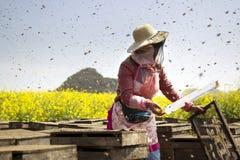 El apicultor en el campo de flores Foto de archivo libre de regalías