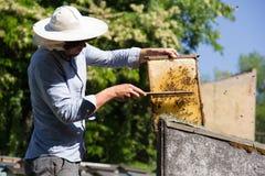 El apicultor en el trabajo por la abeja de madera encorcha Granjero joven en su granja Fotografía de archivo libre de regalías