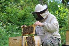 El apicultor en el trabajo por la abeja de madera encorcha Granjero joven en su granja Imagen de archivo libre de regalías
