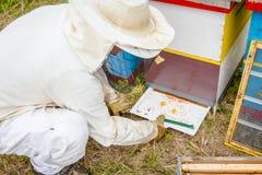 El apicultor está comprobando el polen colorido recogido de la abeja en el pla blanco Fotografía de archivo libre de regalías