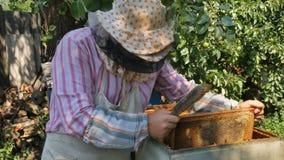 El apicultor está sacudiendo las abejas de un marco en la colmena durante cosecha de la miel almacen de video
