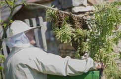 El apicultor está trabajando con las abejas del enjambre - mellifera de los apis Foto de archivo