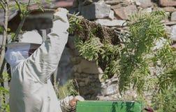 El apicultor está trabajando con las abejas del enjambre - mellifera de los apis Imagen de archivo