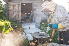 El apicultor está trabajando con las abejas y las colmenas en el colmenar Apicultor en el colmenar Imagen de archivo