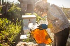 El apicultor está trabajando con las abejas y las colmenas en el colmenar Apicultor en el colmenar Foto de archivo libre de regalías