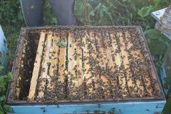 El apicultor está trabajando con las abejas y las colmenas en el colmenar Apicultor en el colmenar Imágenes de archivo libres de regalías