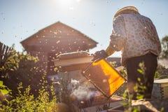 El apicultor está trabajando con las abejas y las colmenas en el colmenar Apicultor en el colmenar Foto de archivo