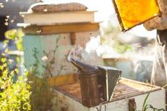 El apicultor está trabajando con las abejas y las colmenas en el colmenar Apicultor en el colmenar Fotos de archivo