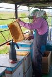 El apicultor está trabajando con las abejas y las colmenas en el colmenar Apicultor en el colmenar Apicultor que tira del marco d Fotografía de archivo