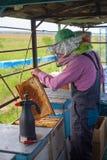 El apicultor está trabajando con las abejas y las colmenas en el colmenar Apicultor en el colmenar Apicultor que tira del marco d Foto de archivo libre de regalías