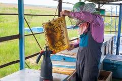 El apicultor está trabajando con las abejas y las colmenas en el colmenar Apicultor en el colmenar Apicultor que tira del marco d Imágenes de archivo libres de regalías