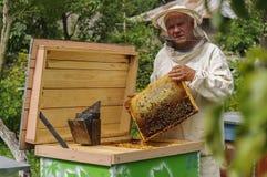 El apicultor está trabajando con las abejas y las colmenas en el colmenar Fotos de archivo