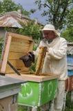 El apicultor está trabajando con las abejas y las colmenas en el colmenar Fotos de archivo libres de regalías