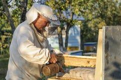 El apicultor está trabajando con las abejas y las colmenas en el colmenar Foto de archivo