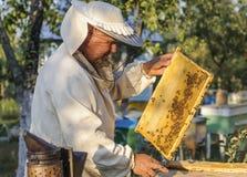 El apicultor está trabajando con las abejas y las colmenas en el colmenar Foto de archivo libre de regalías