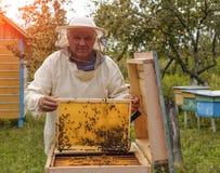 El apicultor está trabajando con las abejas y las colmenas en el colmenar Imagen de archivo