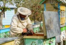 El apicultor está trabajando con las abejas y las colmenas en el colmenar Imagenes de archivo