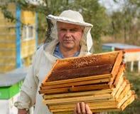 El apicultor está trabajando con las abejas y las colmenas en el colmenar Imagen de archivo libre de regalías