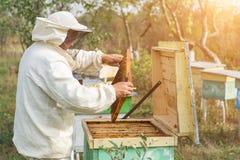 El apicultor está trabajando con las abejas y las colmenas en el colmenar Apicultura Fotos de archivo