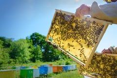 El apicultor está trabajando con las abejas y las colmenas en el colmenar Apicultura Imágenes de archivo libres de regalías