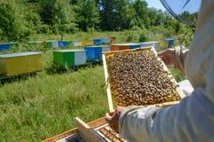 El apicultor está trabajando con las abejas y las colmenas en el colmenar Apicultura Foto de archivo
