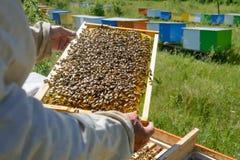 El apicultor está trabajando con las abejas y las colmenas en el colmenar Apicultura Fotografía de archivo