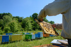 El apicultor está trabajando con las abejas y las colmenas en el colmenar Apicultura Foto de archivo libre de regalías