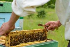 El apicultor está trabajando con las abejas y las colmenas en el colmenar Apicultura Fotografía de archivo libre de regalías