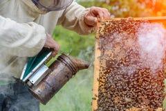 El apicultor está trabajando con las abejas y las colmenas en el colmenar Fumador fumigado apicultor de la abeja Apicultura Imagen de archivo libre de regalías