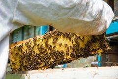 El apicultor guarda un marco con la miel sellada con la cera Foto de archivo libre de regalías