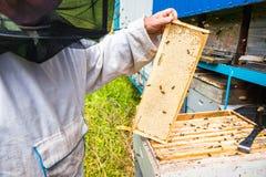 El apicultor guarda un marco con la miel sellada con la cera Fotos de archivo