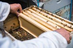 El apicultor guarda un marco con la miel sellada con la cera Fotografía de archivo libre de regalías