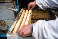 El apicultor guarda un marco con la miel sellada con la cera Imagen de archivo